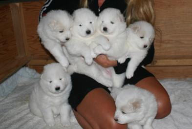 alle pups 3 weeks old
